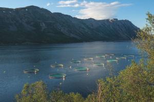 Patagonia estrena documental para denunciar piscifactorías