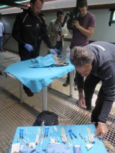 Trangoworld colabora con la Fundación para la Conservación del Quebrantahuesos