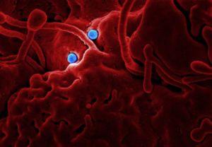 El coronavirus acecha al deporte