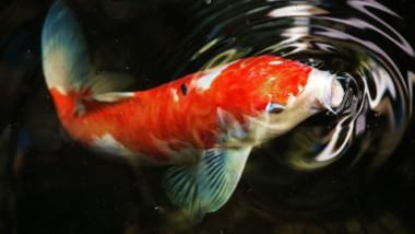 ¿Has oído alguna vez chillar a un pez? Aprende a escuchar el silencio de tu equipo